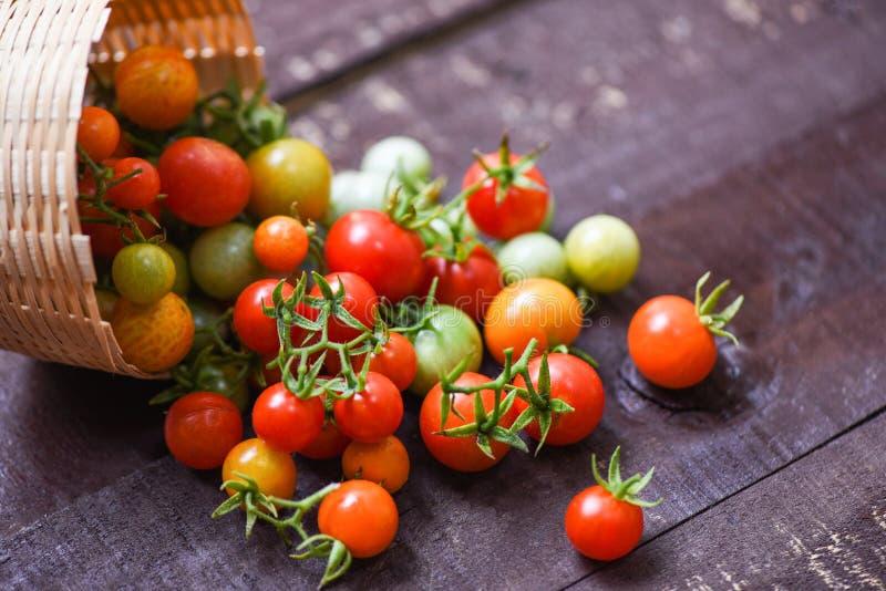 收获新鲜的蕃茄在篮子的有机绿色和成熟红色蕃茄在黑暗的木背景 免版税库存图片