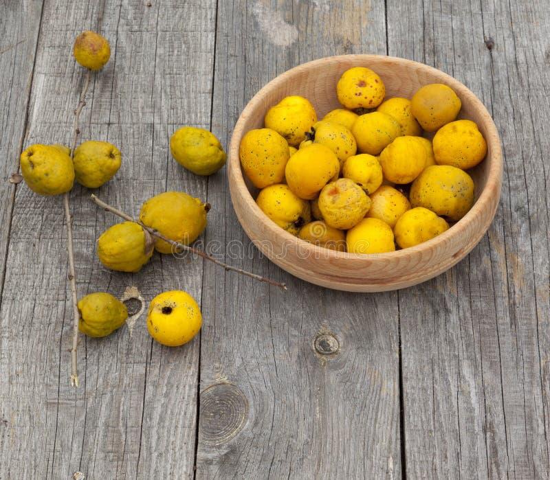 收获日本柑橘(木瓜属japonica) 图库摄影