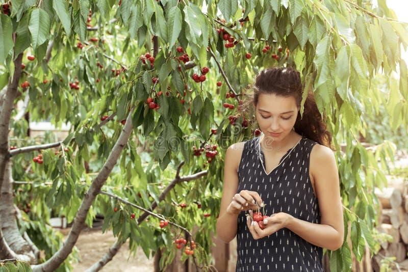 收获果子和莓果 图库摄影