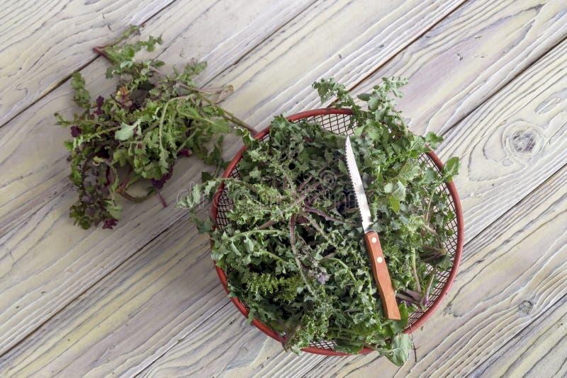 收获植物苣苦菜在木桌希腊烹调的苣苦菜oleraceus 免版税库存照片