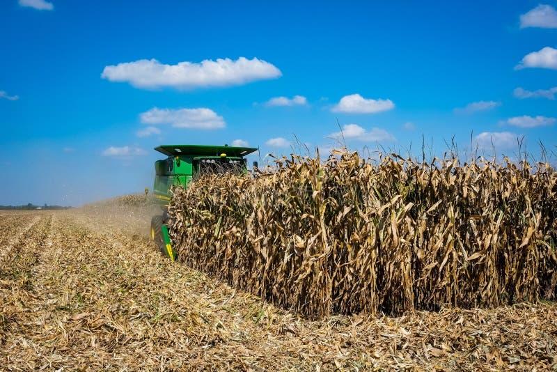 收获玉米在印第安纳 免版税库存图片