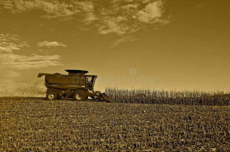 收获玉米的案件IH 免版税库存照片