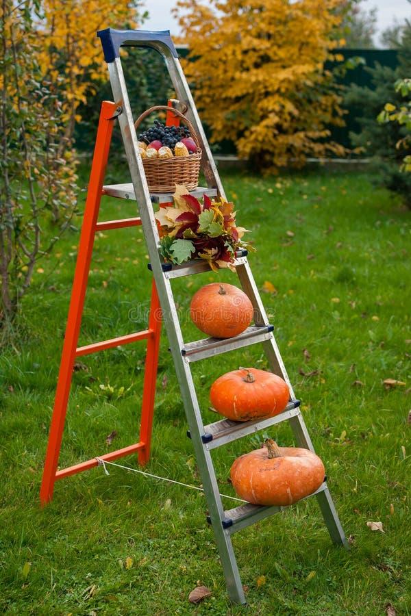 收获的果子秋天梯子  免版税图库摄影