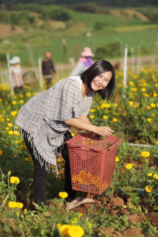 收获花的妇女 免版税库存照片