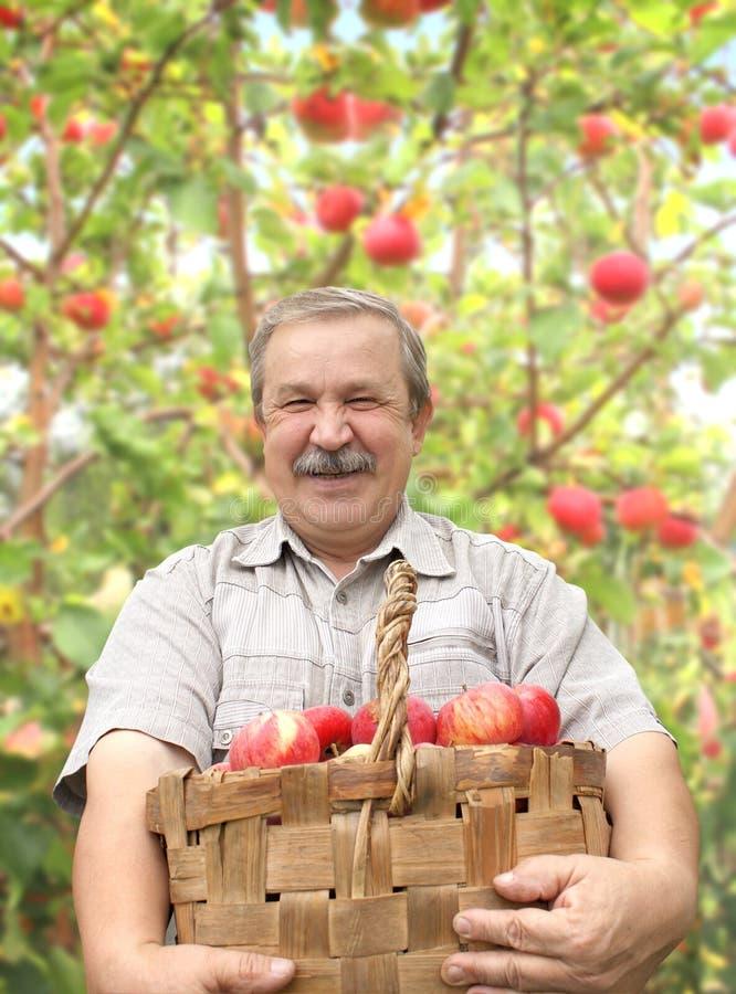 收获苹果的年长人 库存图片