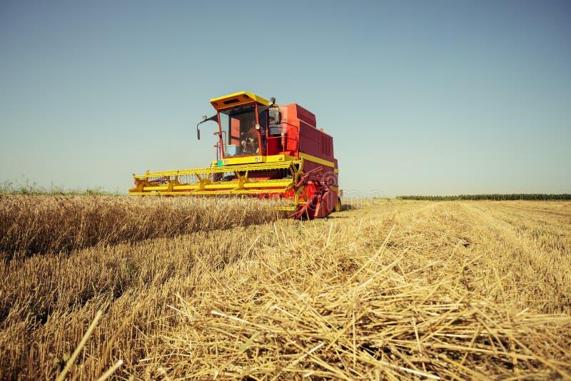 收获麦子收割机在一个晴朗的夏日 免版税图库摄影