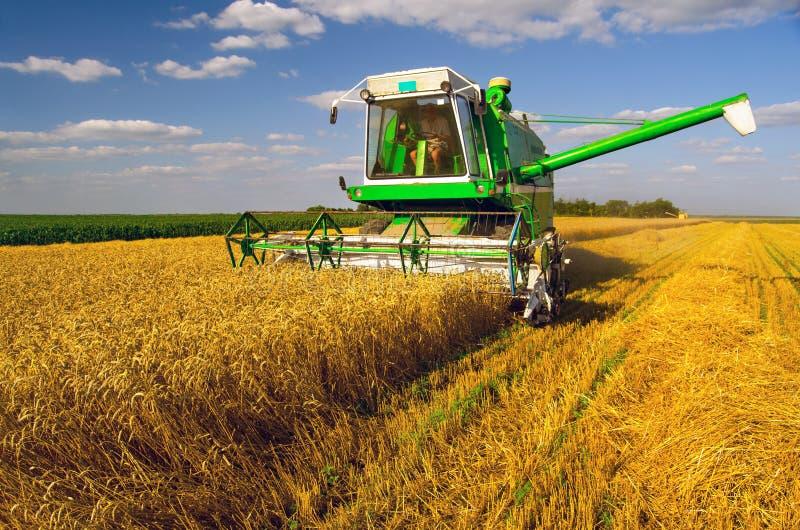 收获麦子的联合收割机在晴朗的夏日 库存图片