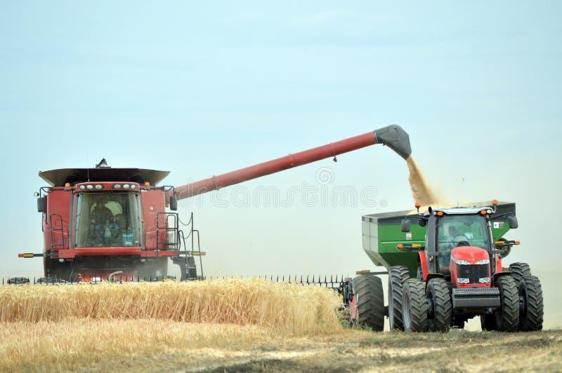 收获麦子的组合和拖拉机 免版税图库摄影