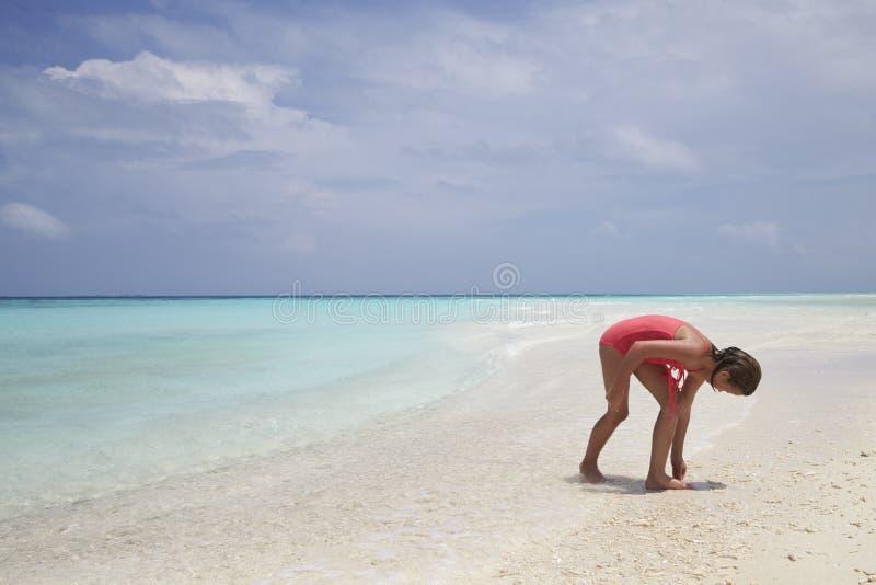 收集在一个白色沙子海滩的女孩海壳 免版税库存图片