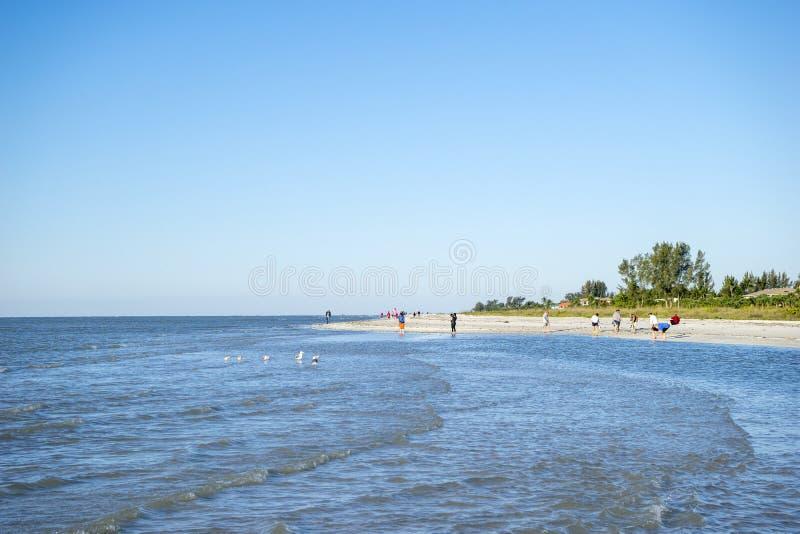 收集在海滩#1的人们贝壳 免版税库存照片