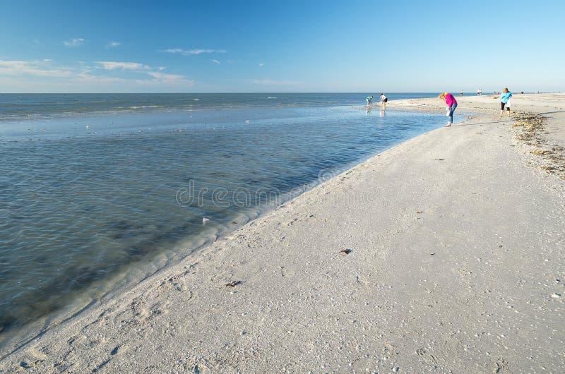 收集在海滩#1的妇女贝壳 免版税库存图片