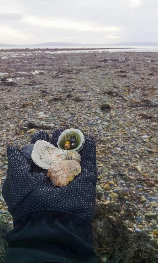 收集壳和岩石象纪念品 免版税库存照片
