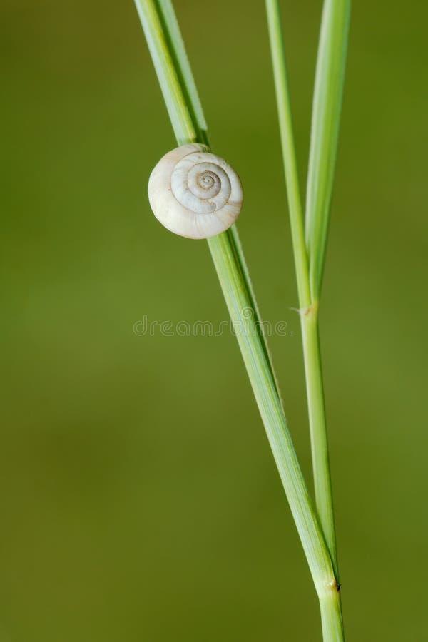 收集来穿上知道的我的壳蜗牛t 库存照片