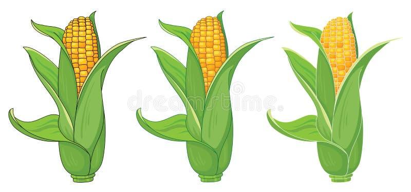 收集玉米 向量例证