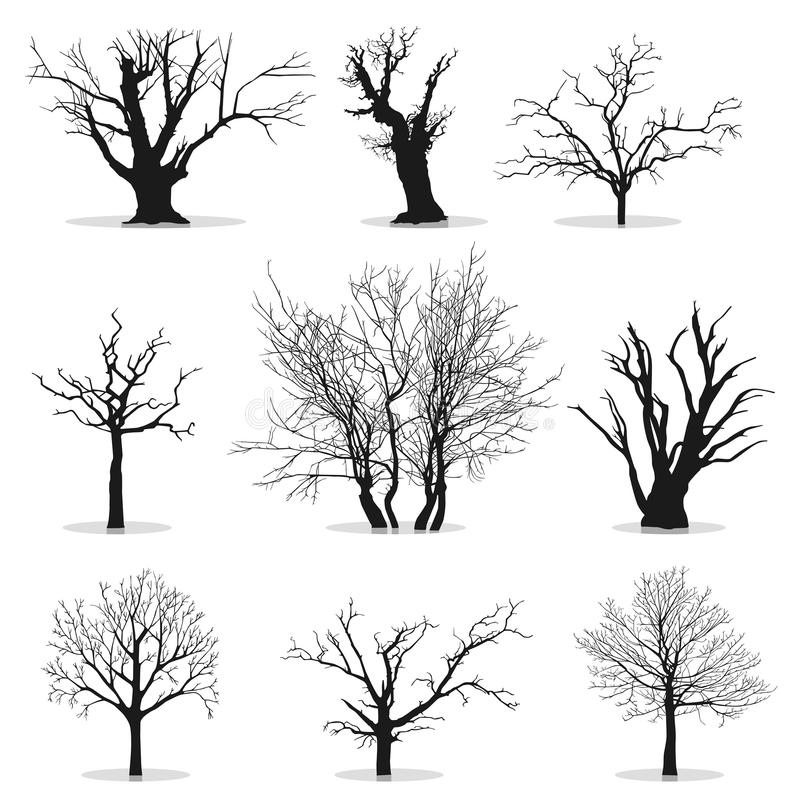 收集现出轮廓结构树 皇族释放例证