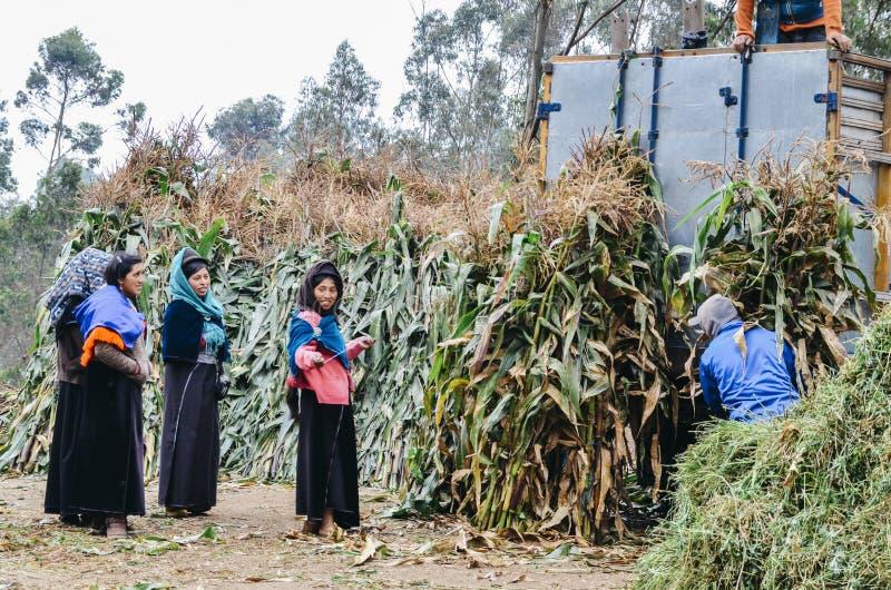 收集粗糖藤茎植物的年轻土产妇女从种植园卖在市场上 免版税库存图片