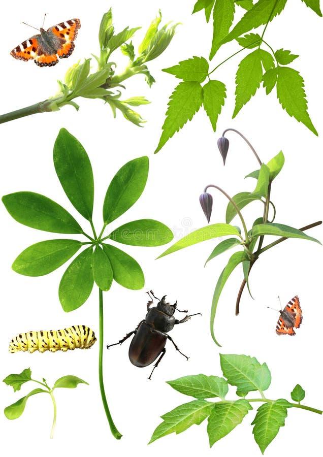 收集绿色昆虫叶子 免版税库存图片