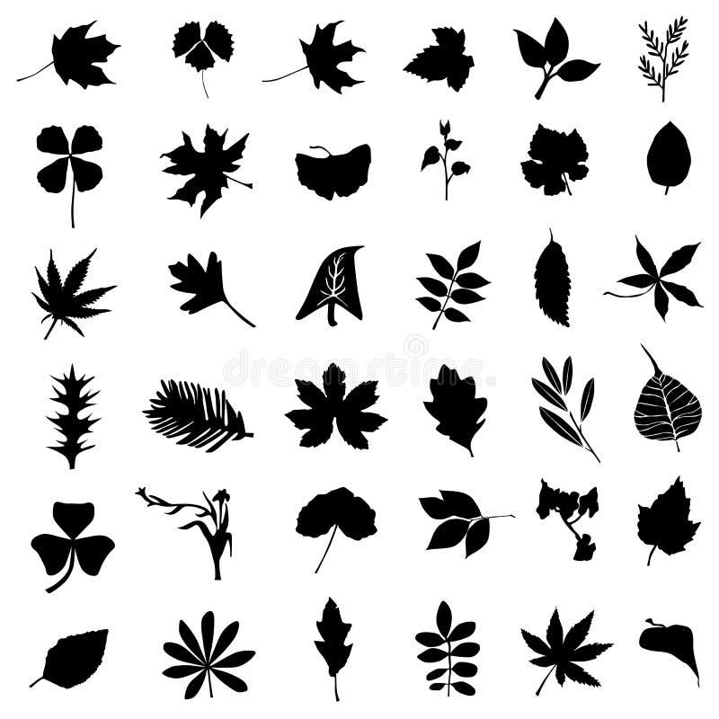 收集花叶子向量 向量例证
