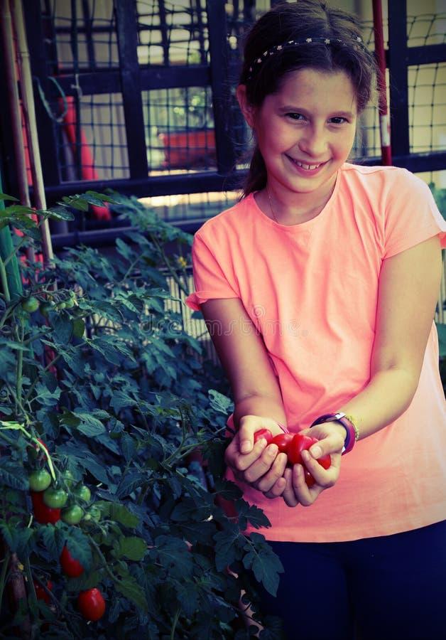 收集蕃茄的微笑的小女孩从有vint的植物 库存图片