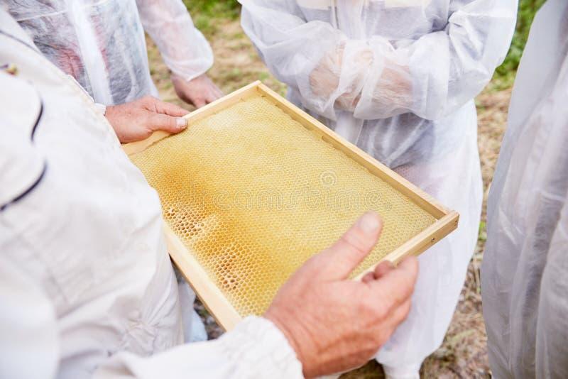 收集蜂蜜和蜡的养蜂家 库存图片