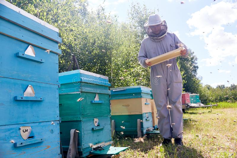 收集蜂蜜的蜂农 库存图片