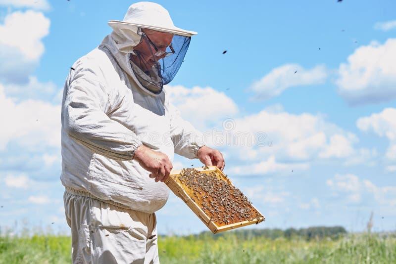收集蜂蜜的资深蜂农 免版税库存图片