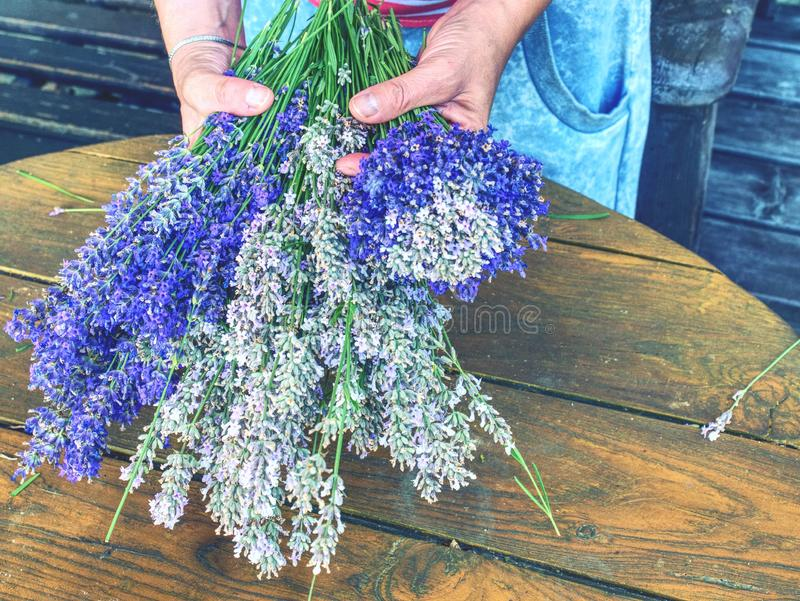 收集被混和的茎 美味的气味淡紫色 免版税库存图片