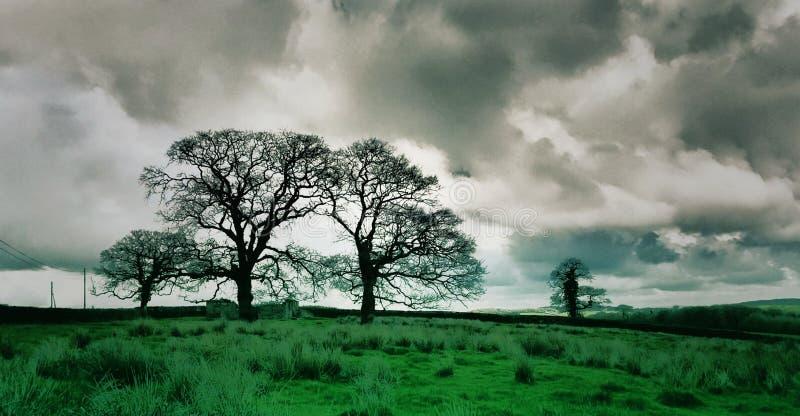-改进的树阴云密布 免版税图库摄影