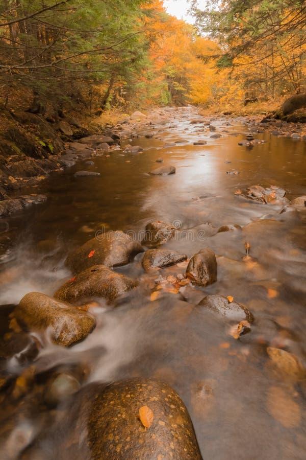 放出在与金黄秋天叶子的秋天在缅因 库存照片