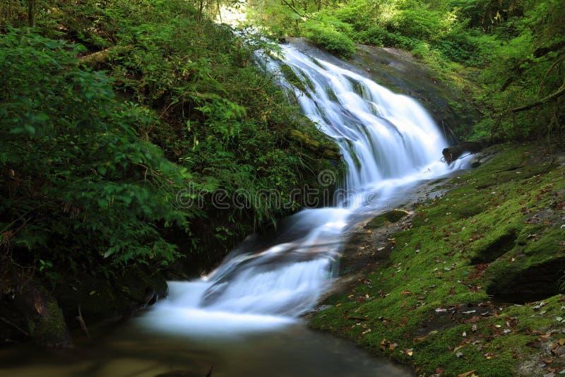 放出在雨林,清迈,泰国的瀑布 免版税图库摄影