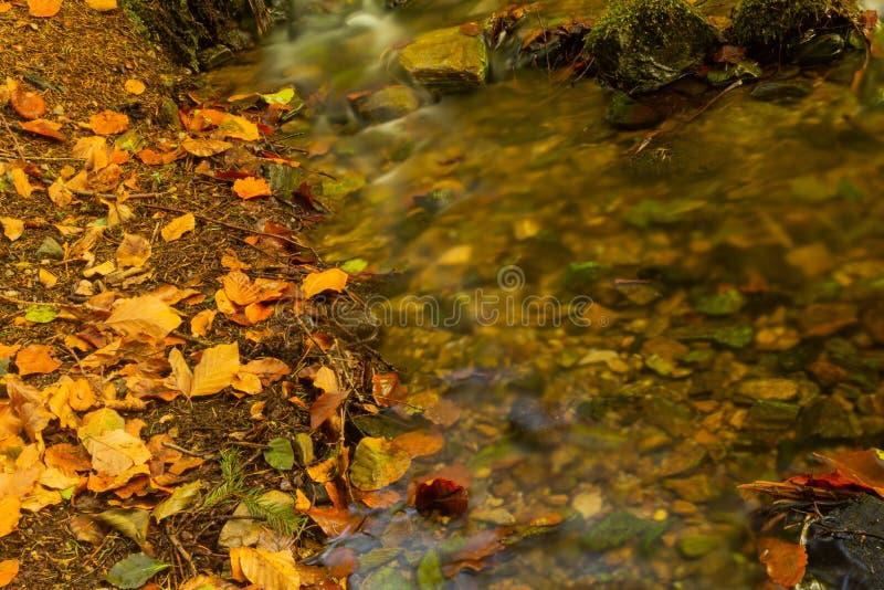 放出柔和落下在有小瀑布在前景和新鲜的绿色蕨的一个山森林下在背景中 库存照片