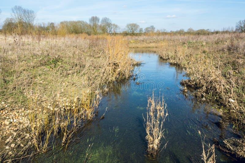 放出流动在野草领域在早期的春天 免版税库存照片