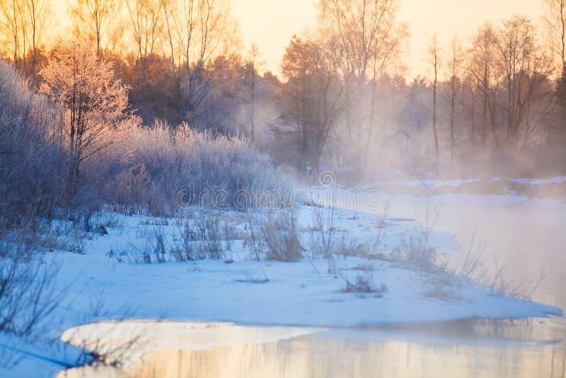 放出通过冬天森林的明亮的阳光 免版税库存照片