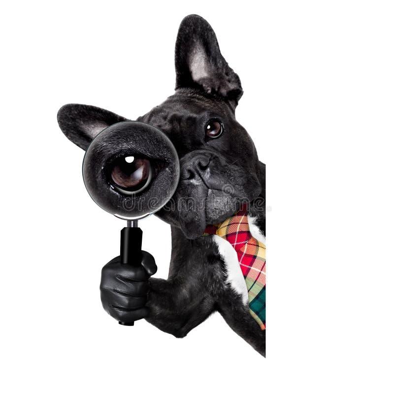 放大镜狗 库存图片