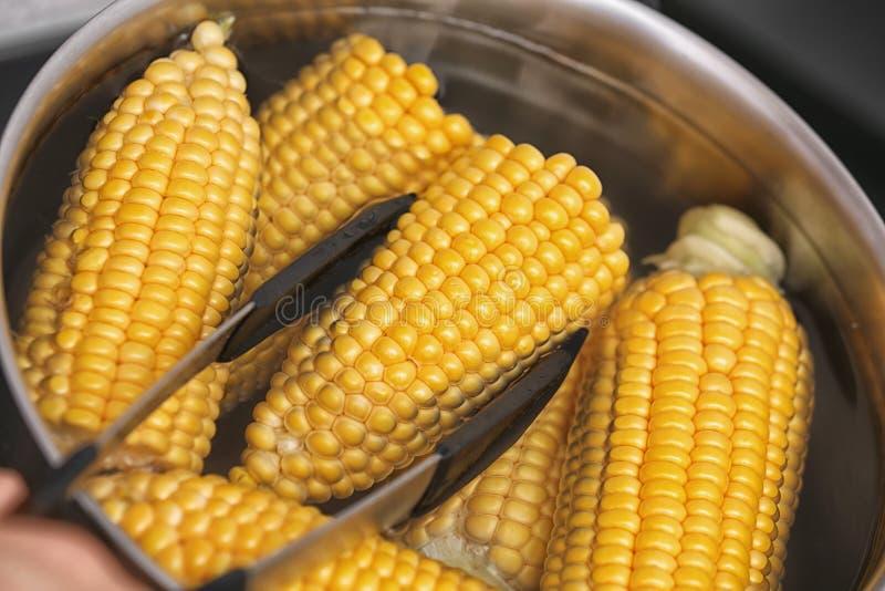放未加工的玉米棒子入stewpot 免版税库存照片