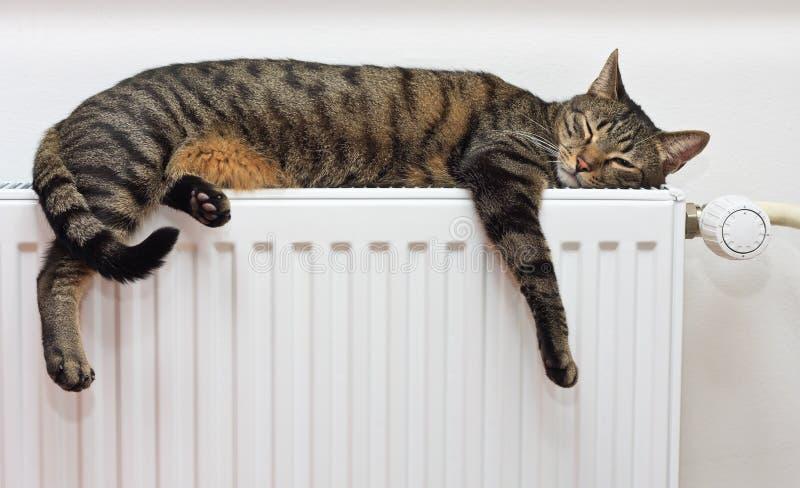 放松在一台温暖的幅射器的猫 免版税库存照片
