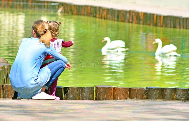 放松在公园的母亲和孩子由池塘 坐边路由湖和看在与两白色天鹅的水的他们 库存图片