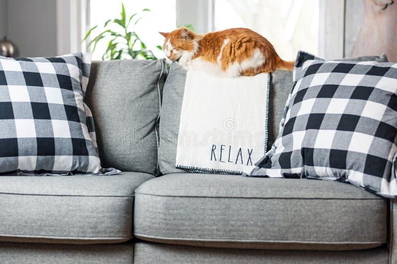 放松在客厅长沙发的橙色猫 免版税图库摄影