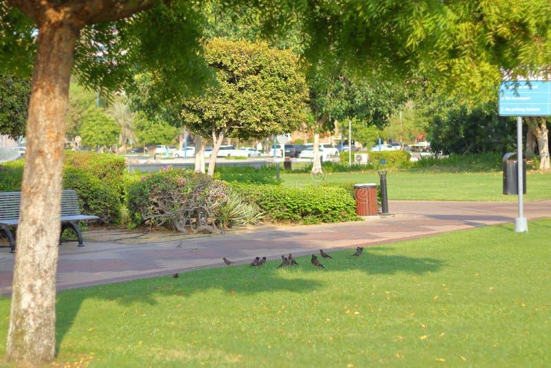 放松在树荫的鸟 免版税库存图片