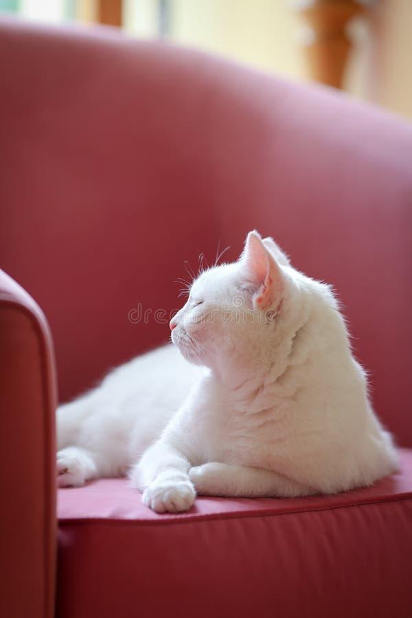 放松在沙发的白色猫 免版税库存照片