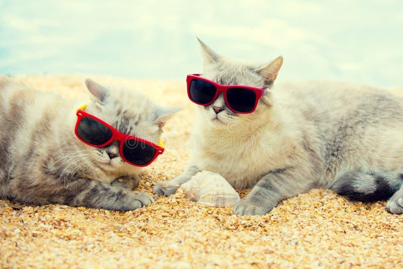 放松在海滩的两只猫 图库摄影