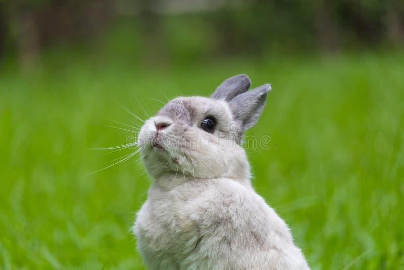 放松在草的逗人喜爱的兔宝宝 免版税图库摄影