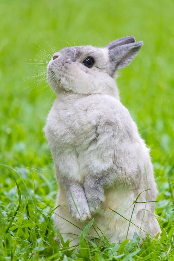 放松在草的逗人喜爱的兔宝宝 免版税库存图片