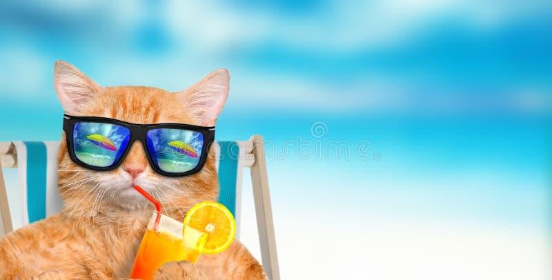放松坐deckchair的猫佩带的太阳镜 免版税库存图片