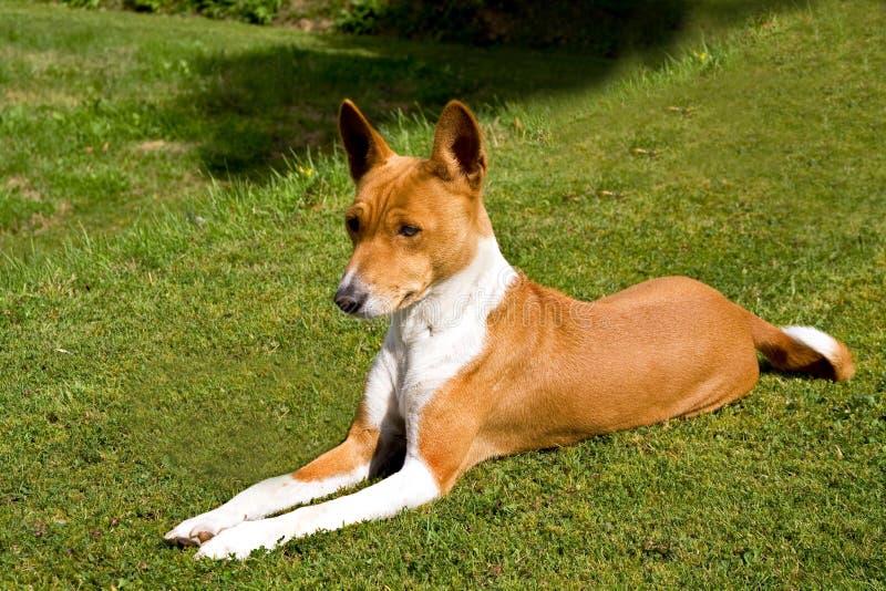 放松的狗草坪 库存照片