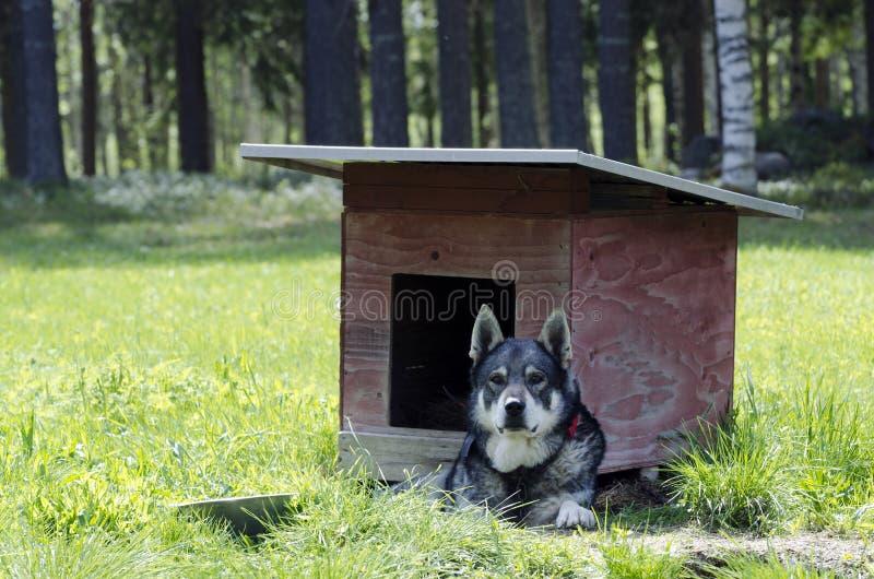 放松的狗 免版税库存图片
