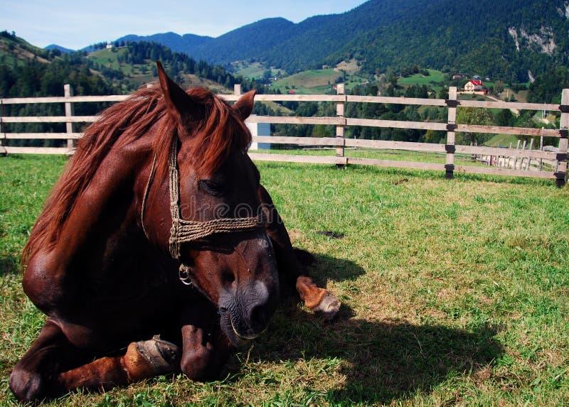 放松的马 免版税库存图片