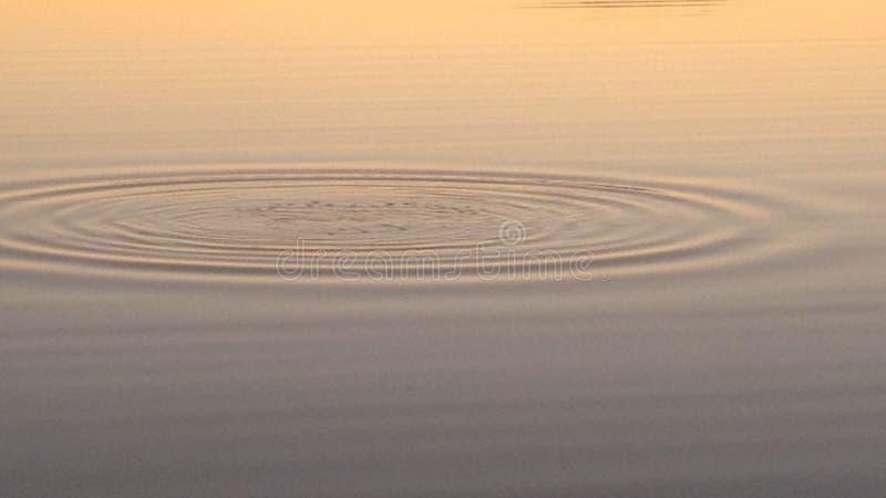 放热在寂静的水的波纹在日落 图库摄影