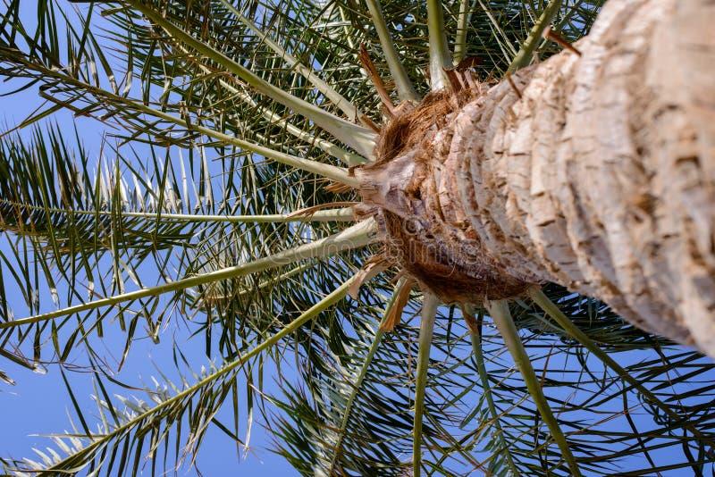 放热棕榈叶状体看法  免版税库存照片