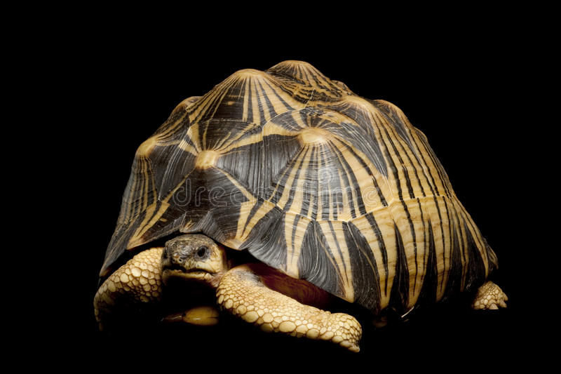 放热的草龟 库存照片